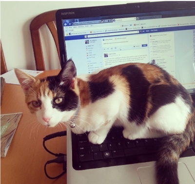 16 Cats Who Just Really Want Your Attention